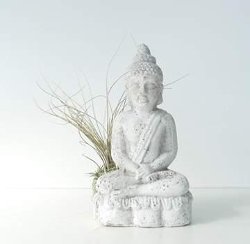 Immagine di Buddha con Tillandsia