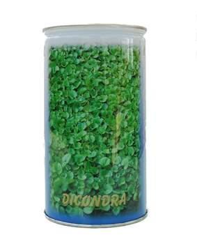 Picture of Seme da prato Dichondra Repens