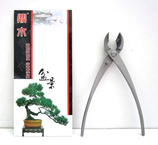 tronchese obliqua bonsai