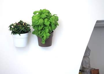 vaso verde verticale