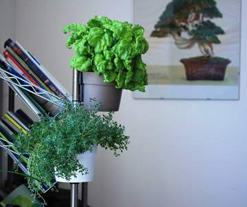 vaso magnetico verde verticale